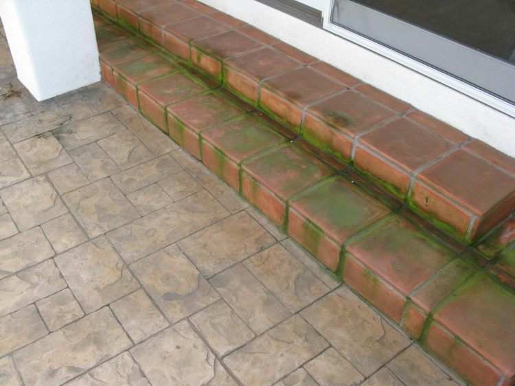Exterior Mexican pavers need cleaning, mold & mildew removal | Stone ...
